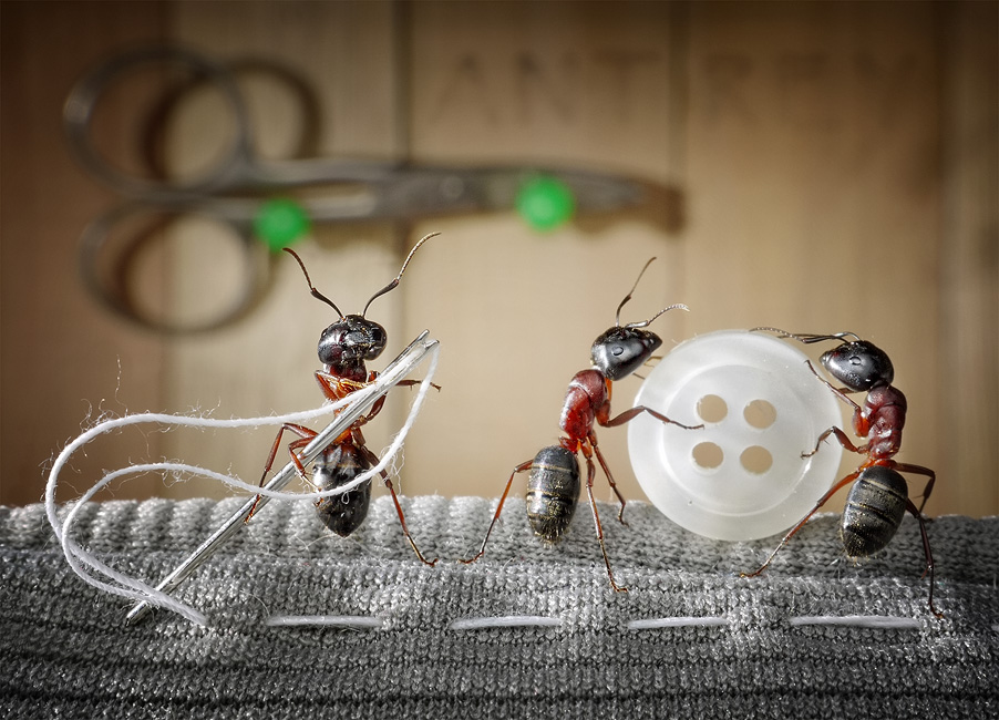Ant Tale